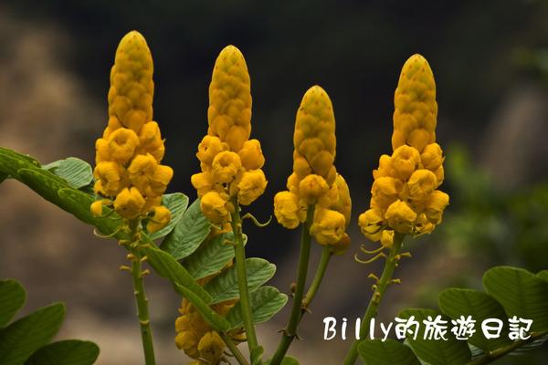 花卉02.jpg