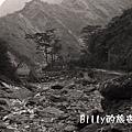 屏東好茶村6808.jpg