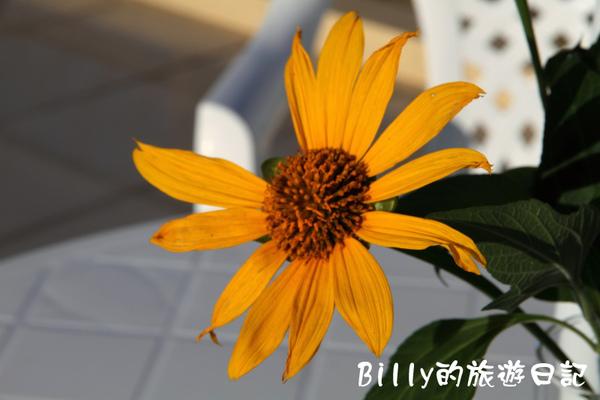 高雄茂林多納黑米祭052.JPG