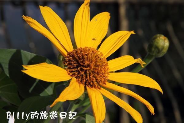 高雄茂林多納黑米祭056.JPG
