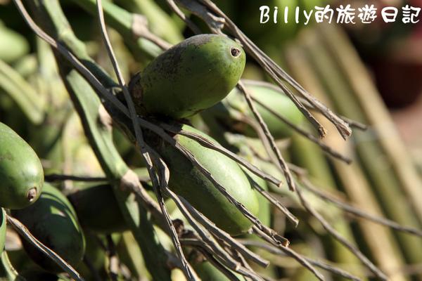 高雄茂林多納黑米祭298.JPG
