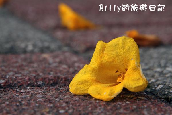 花19.JPG