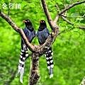 佳作-溫紹良-琴瑟和鳴(NO.769).jpg