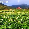 佳作-葉世賢-午後的竹子湖(NO.707)ok.jpg