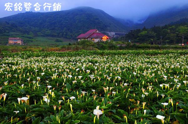 佳作-葉世賢-竹子湖風光(NO.382)ok.jpg