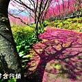 佳作-葉世賢-櫻花林(NO.380).jpg
