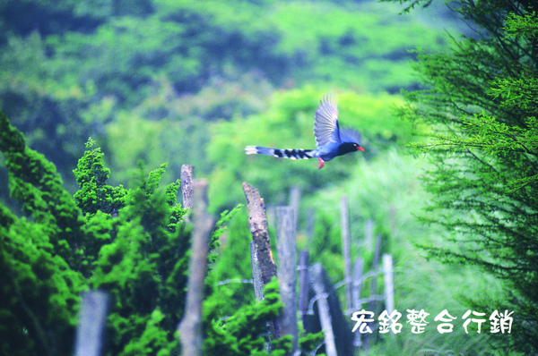優選-洪清泉-飛越冷水坑(NO.4).jpg