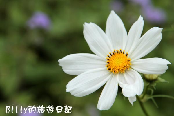 楊梅高榮社區24.JPG