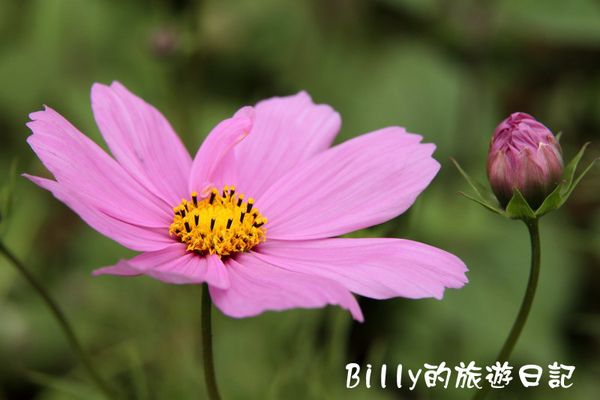楊梅高榮社區27.JPG
