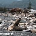 花東海岸10.JPG