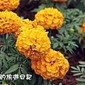 花東旅遊96.JPG