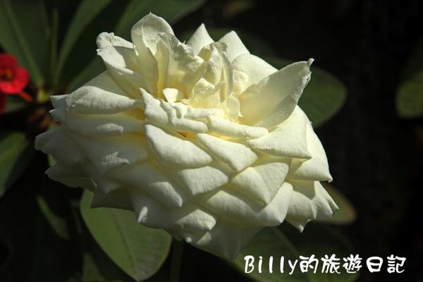 花東旅遊69.JPG