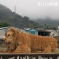 花東花海節09.JPG