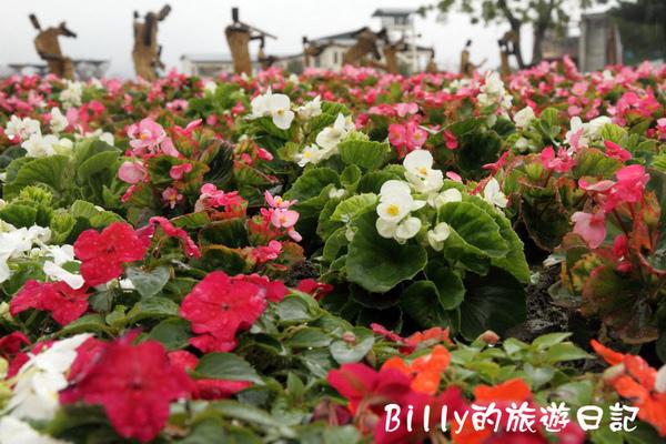 花東花海節36.JPG