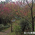 基隆紅淡山057.jpg