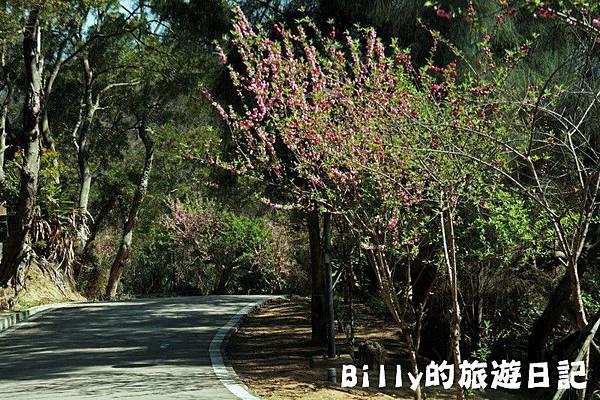 馬祖東莒-桃花31.JPG