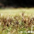 花卉圖片24.JPG
