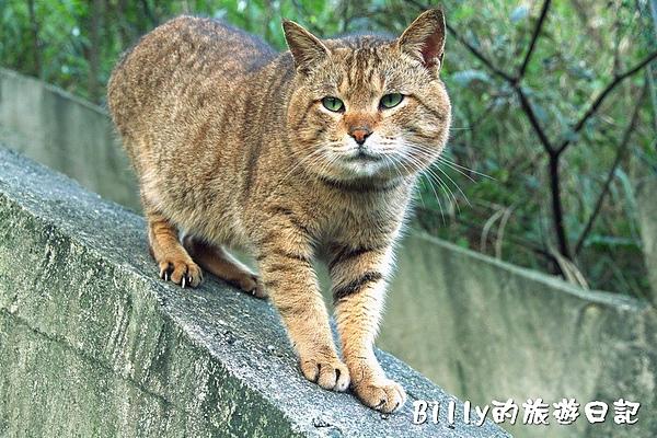 侯硐貓村062.jpg
