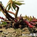 花卉圖片18.JPG