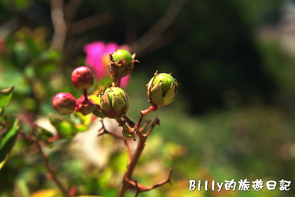 馬祖東莒-魚路古道063.jpg