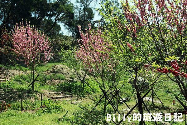 馬祖東莒-桃花10.JPG