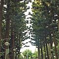台北市植物園31.jpg