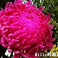 花卉圖片16.JPG