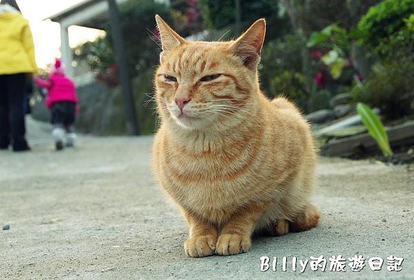 侯硐貓村077.jpg