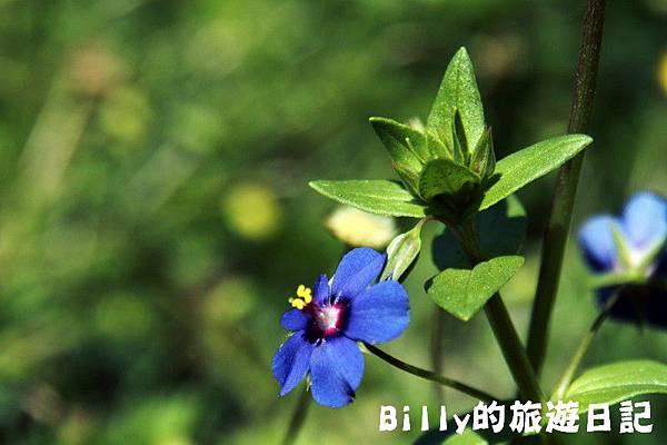 馬祖東莒-桃花28.JPG