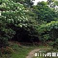 月眉山桐花09.JPG