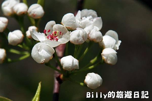 馬祖東莒-桃花04.JPG