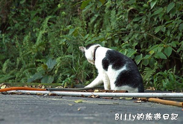 侯硐貓村051.jpg