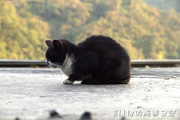 侯硐貓村052.jpg