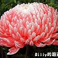 花卉圖片20.JPG