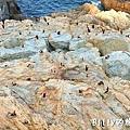 馬祖北竿大坵島058.jpg