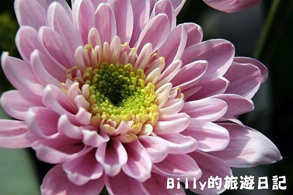 花卉圖片31.JPG