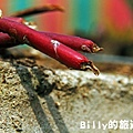 花卉圖片19.JPG