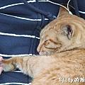 侯硐貓村084.jpg