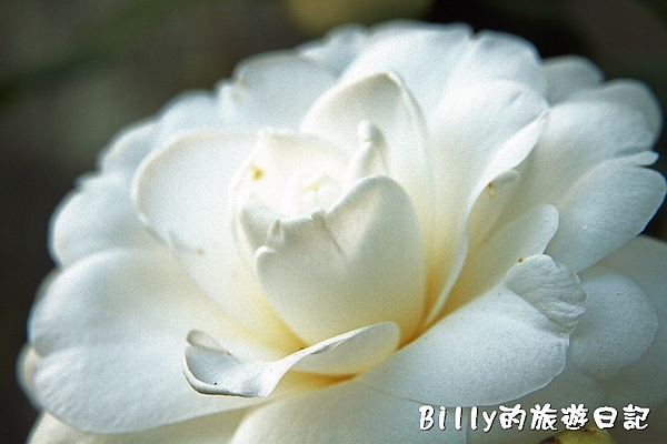 侯硐貓村073.jpg