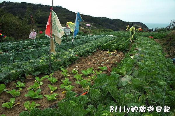 東莒的白菜04.jpg