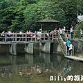 2011七堵桐花004.JPG