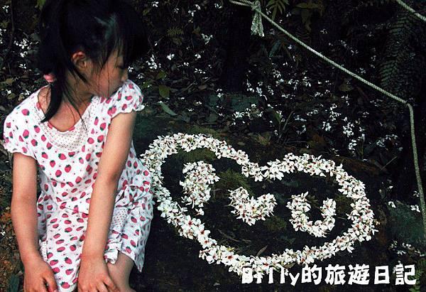 2011七堵桐花032.JPG