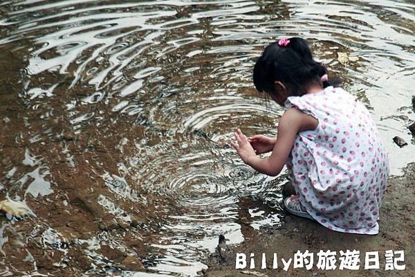 2011七堵桐花003.JPG