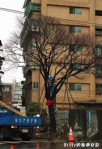 鐵道公園百年櫻花樹13.jpg
