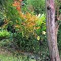 台北市植物園08.jpg