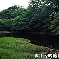 月眉山桐花17.JPG