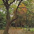 台北市植物園30.jpg