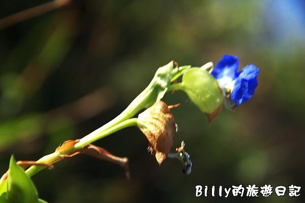 東莒犀牛嶼003.jpg