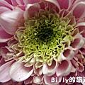 花卉圖片08.JPG