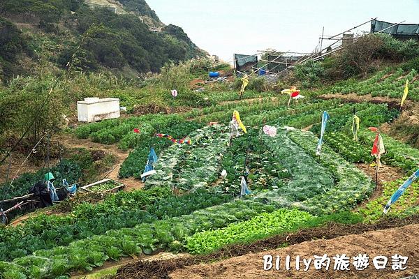 東莒的白菜09.jpg